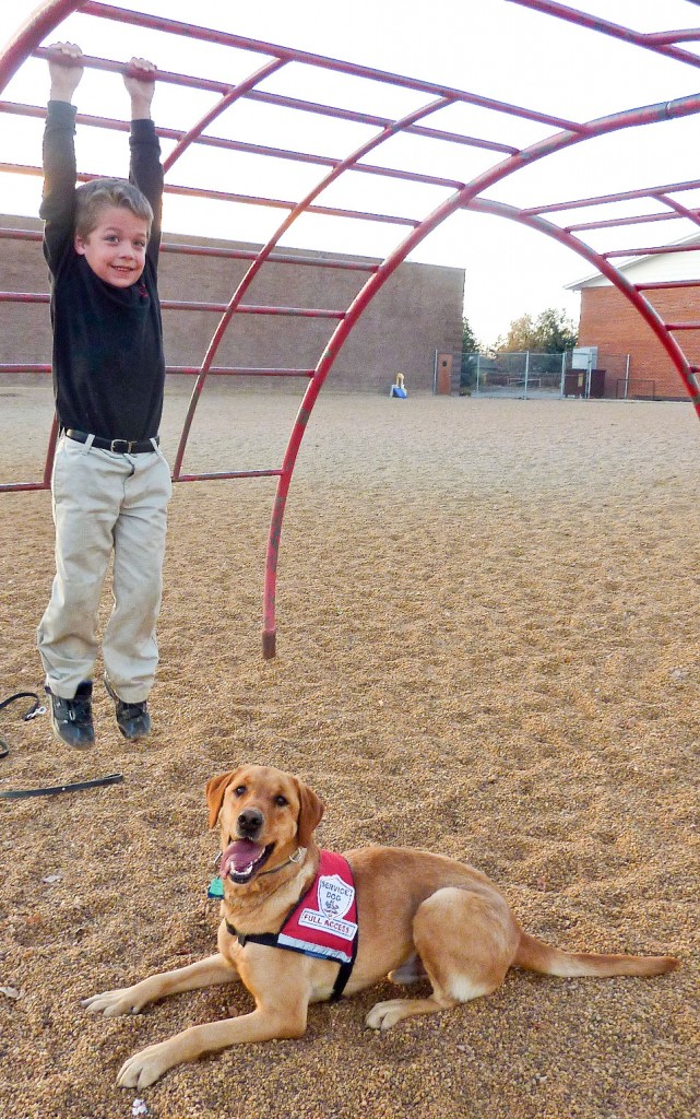 Detection Dogs on the playground