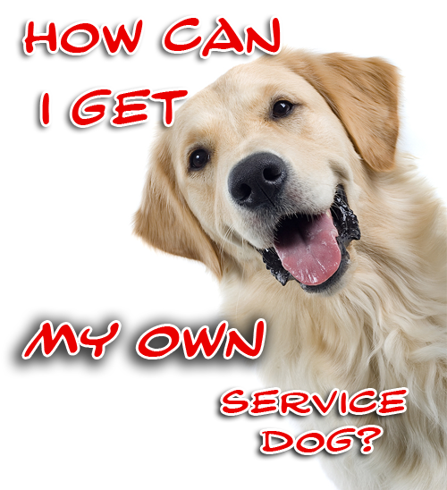 How can I apply for my own allergy detection service dog?